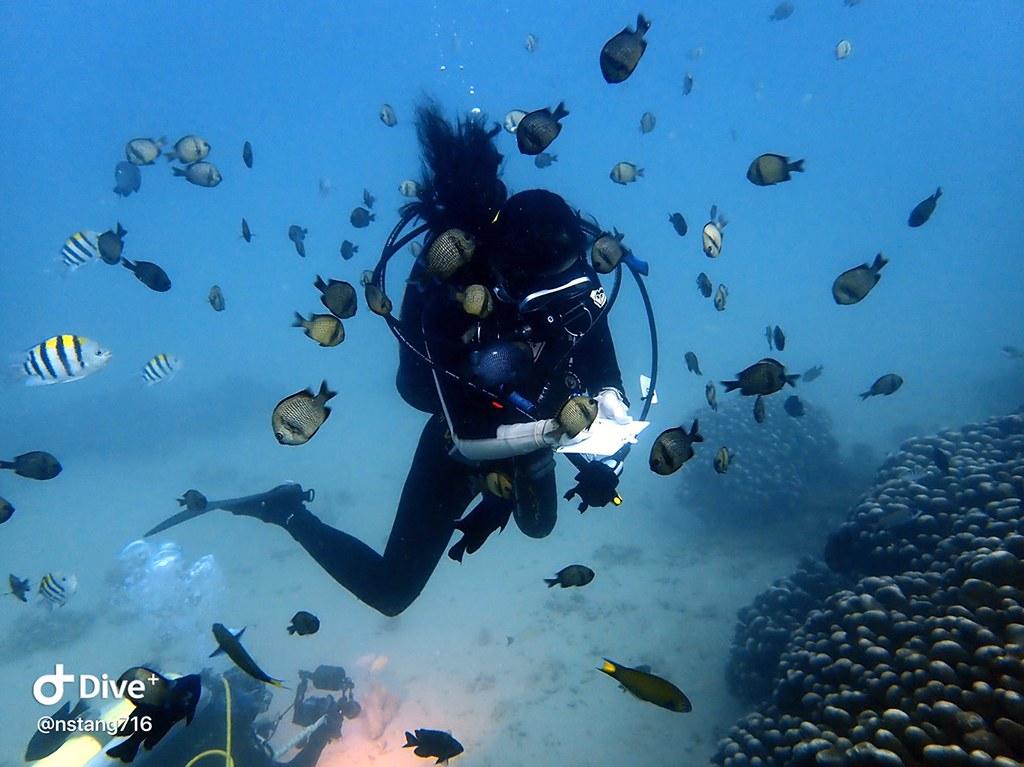 日常防曬照樣能友善海洋 珊瑚礁體檢職人有醫美品牌相挺 用消費守護海洋健康