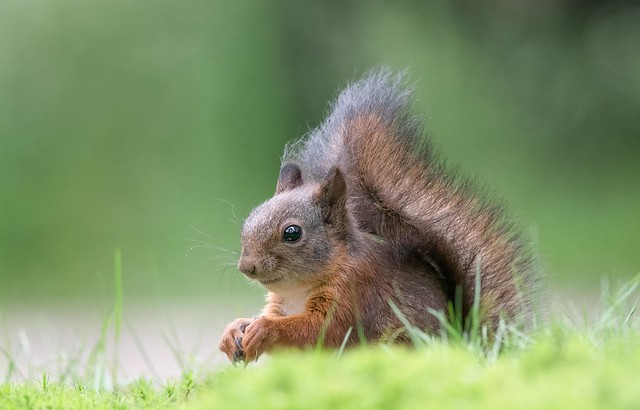 Such cute little critters!