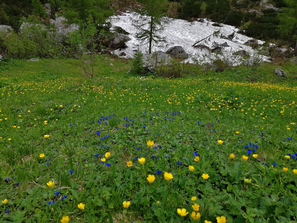Italien, Rund um Molveno/Trento-(Dolomiten) Brenta-Gebirge, Am Rifugio Selvata, 79095/13751