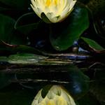Saffron Reflection