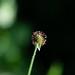 flower 2021-1-6