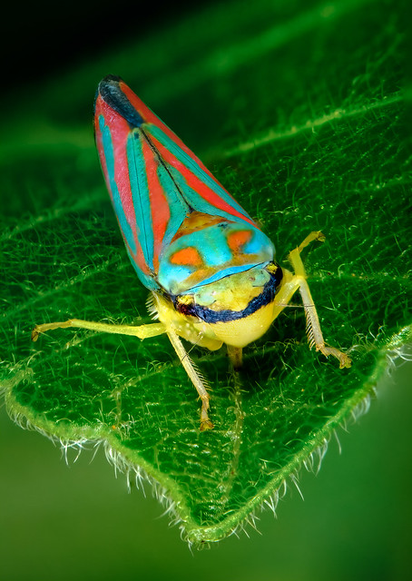 Small and Colorful