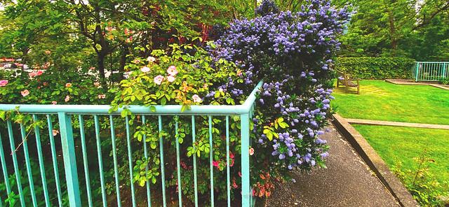 Happy Fence Friday! (+1)