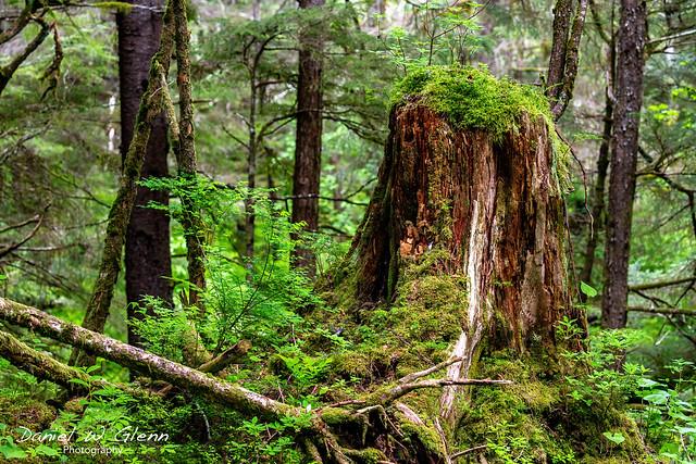 Alaska Rainforest