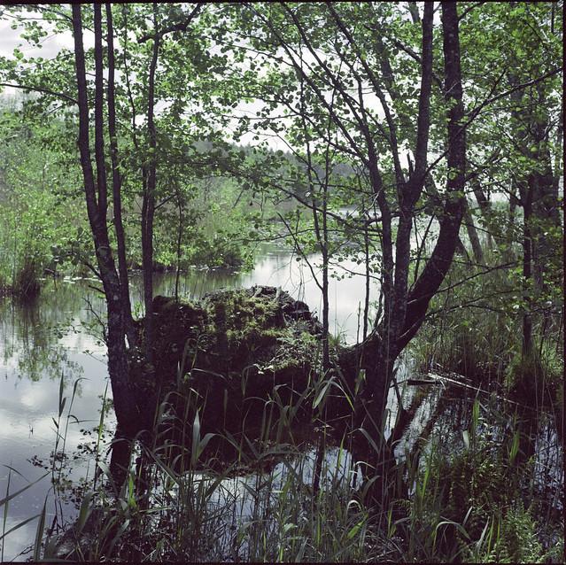 A lake near Cecis, Latvia
