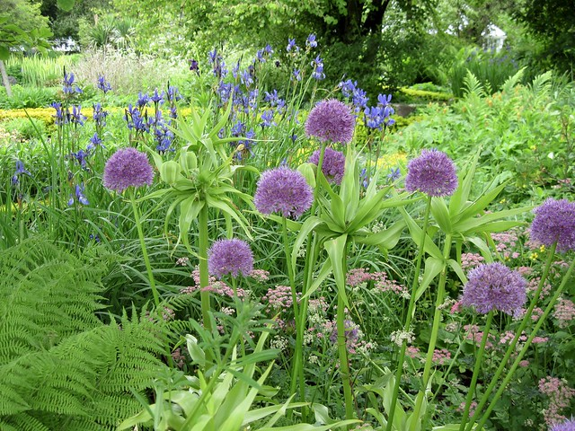 Flowers in the garden of Broughton House, Kirkcudbright, Dumfries and Galloway, Scotland.