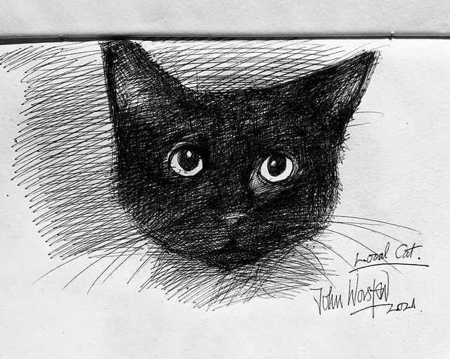 Local cat Portrait. Ballpoint pen drawing by jmsw on recycled card. New sketch book.no2.