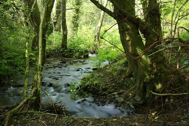 Nant y Bwch Stream