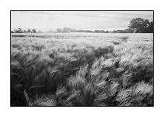 Leicaflex SL Negative - Recovered I