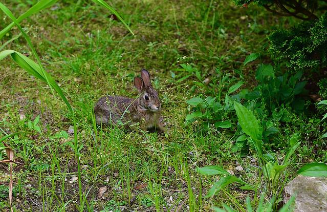 Bunny in the garden!