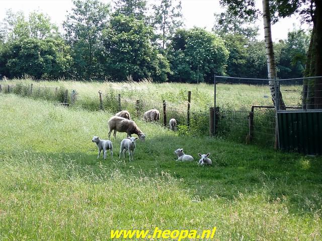 2021-06-09           Nunspeet 't Harde Elburg  (123)
