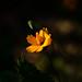 flower 2021-1