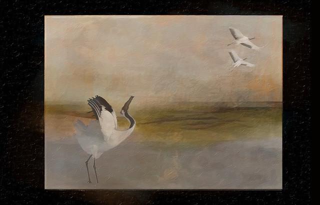 waterbirds 3 collage