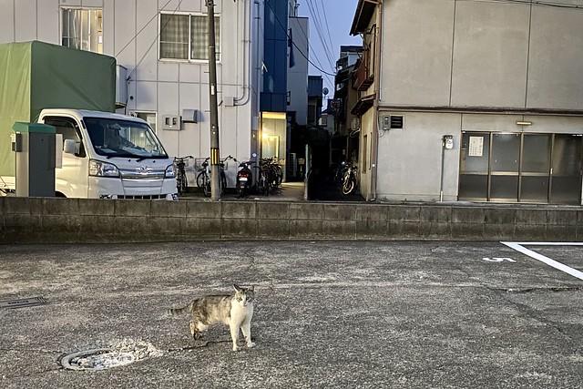 Today's Cat@2021−06−12