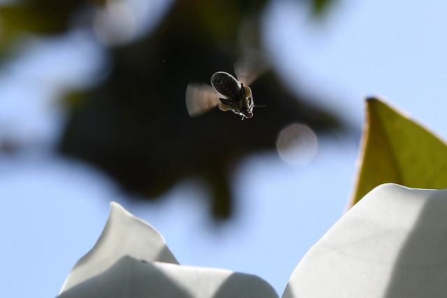 Air Magnolia