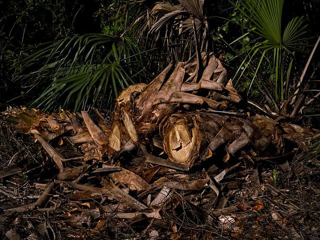 Cut Palm tree