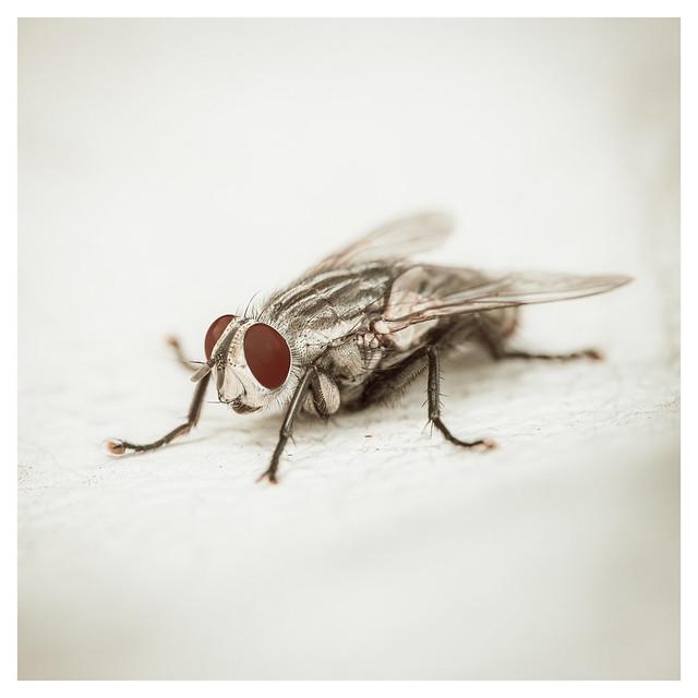 I Spy a Flies Eye - Mt Airy, Philadelphia - PA - Web 1-QX_Scaled