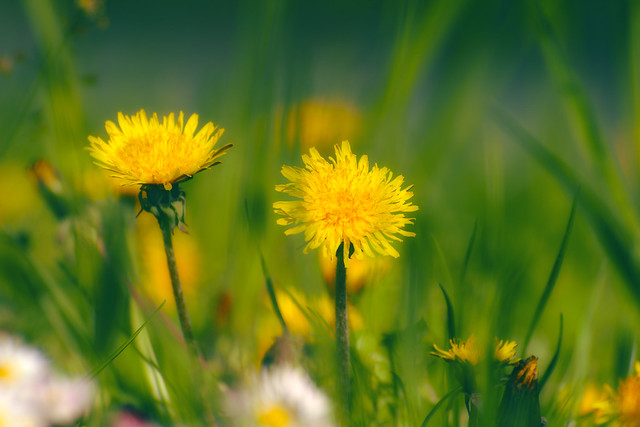 Simple beauties / Egyszerű szépségek