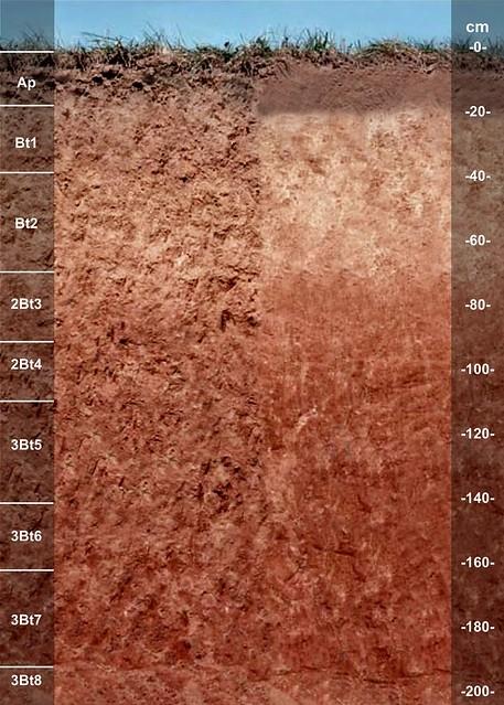 Crider soil series