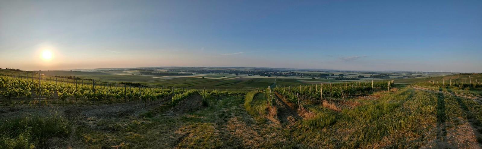 SunriseHike am Selzbogen in Rheinhessen