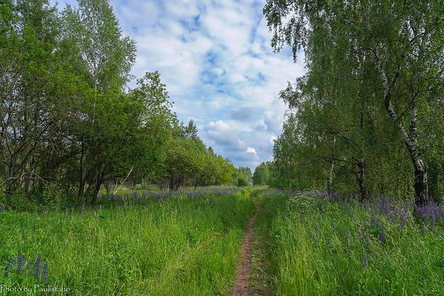 In the field... / В поле...