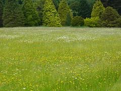 Nymans garden in West Sussex