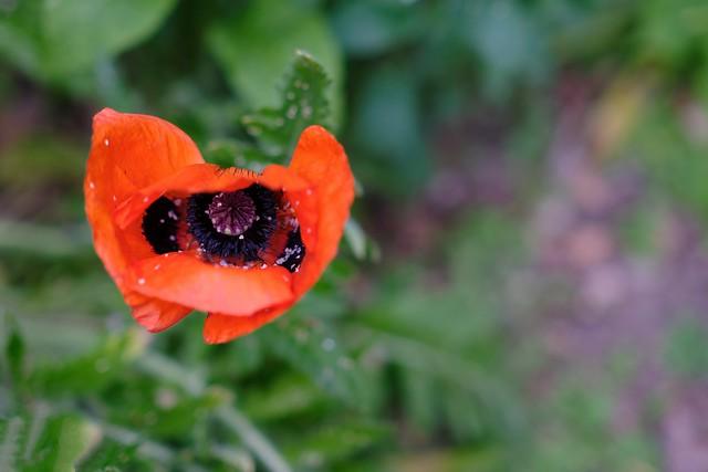 Bokeh in the home garden | June 11th  2021 | Tarbek - Segeberg District - Schleswig-Holstein - Germany