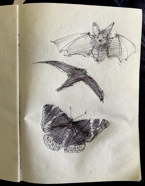 Seen in the garden yesterday. Long eared Bat, Swift's nesting under the eaves, and a Red Admiral butterfly. Pin sketches by jmsw, no2 sketch book 2021.