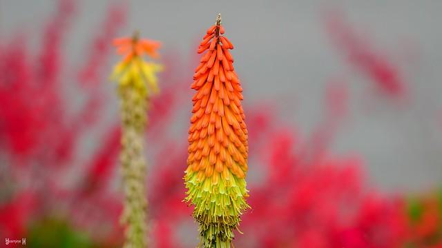 9835 - Flower