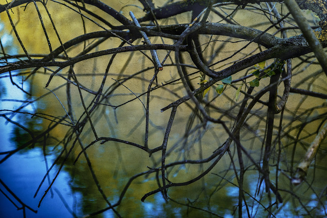 Branches in front of waterreflections