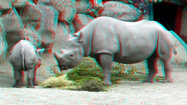 RHINO Blijdorp Zoo Rotterdam 3D