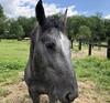 Bad photo of a beautiful horse.