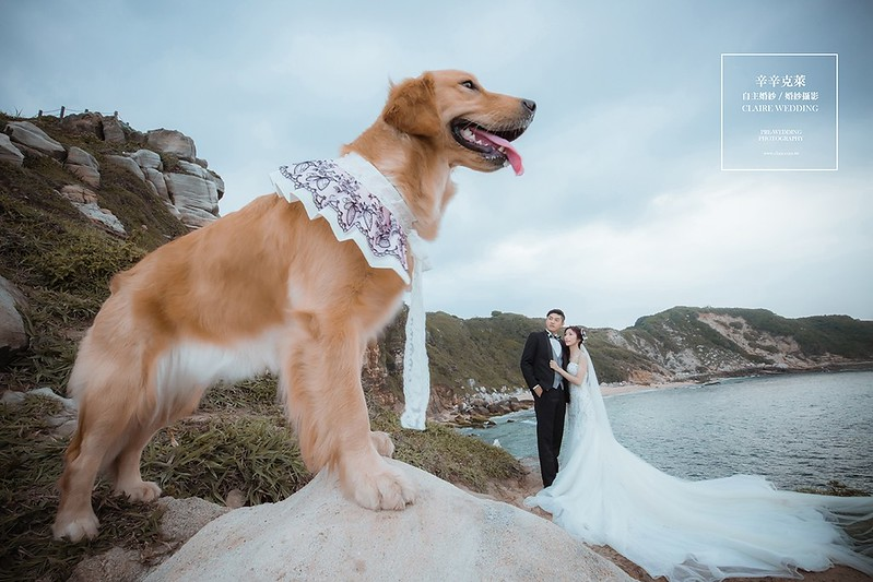寵物婚紗怎麼拍