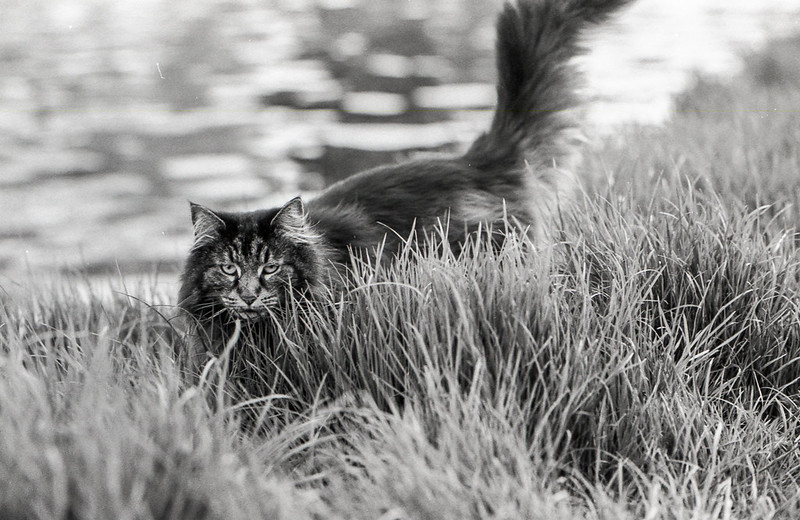 Cat by the Cam