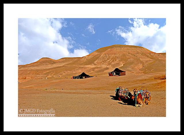 Agafay Desert. Dromedaries & Khaimas