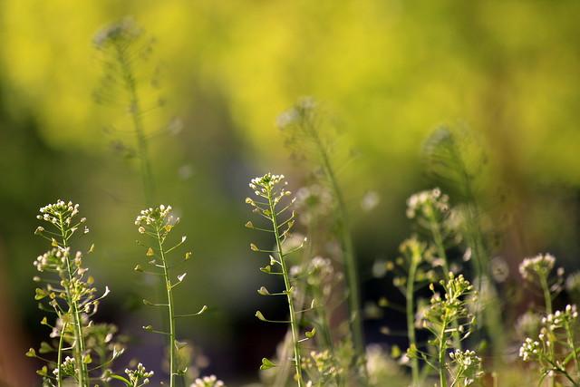 Spring breeze / Tavaszi szellő
