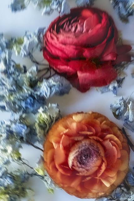 Rose and Ranunculas