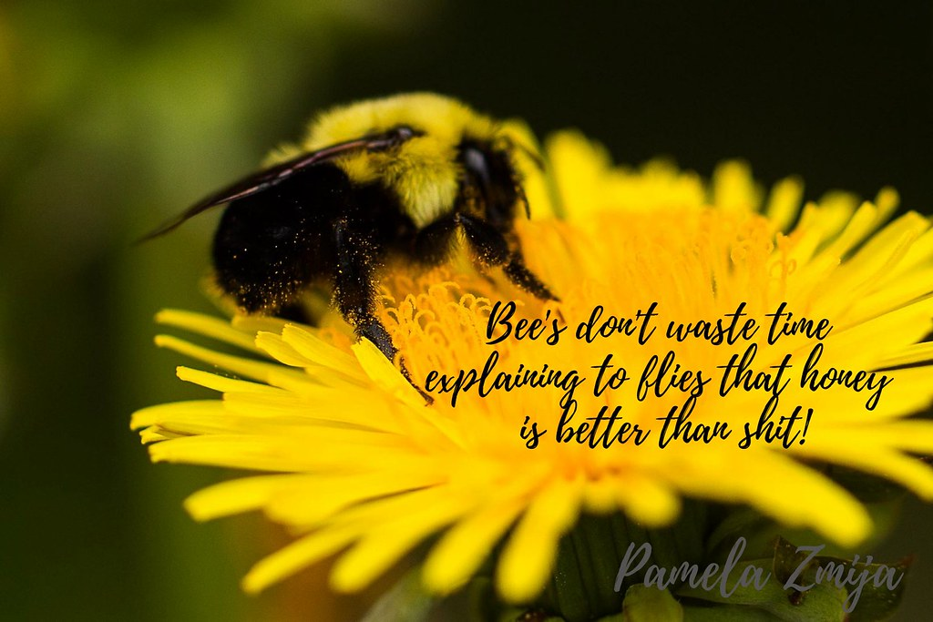 Bee's don't waste time explaining to flies that honey is better than shit!