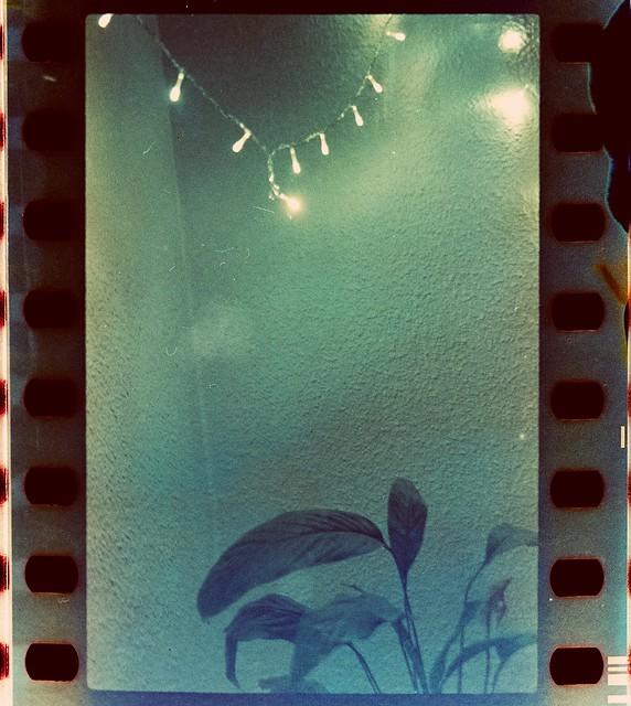 La planta y la luz