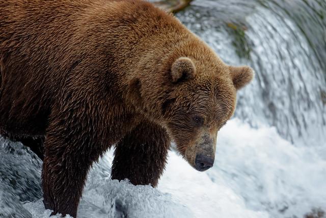 A Wildlife Getaway (Katmai National Park & Preserve)