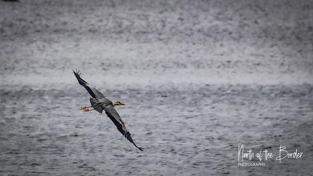 Birds of Glencoe