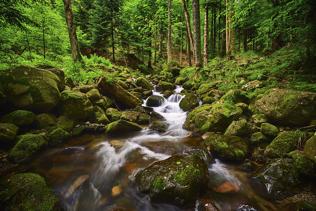 Vosges Alsace