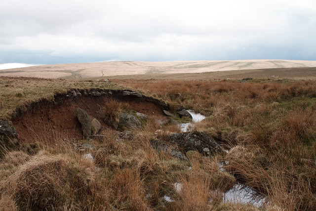 A Dartmoor Stream 4311