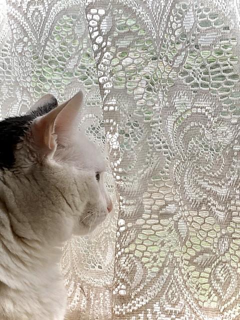 Methinks she's wishing the window was open