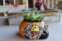 succulent :green_heart: