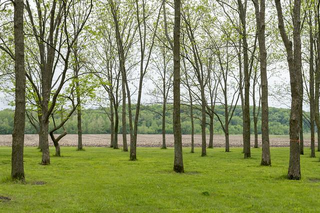 Pecan Grove in Adam-Ondi-Ahman