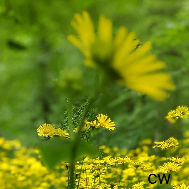 Yellow meets Green