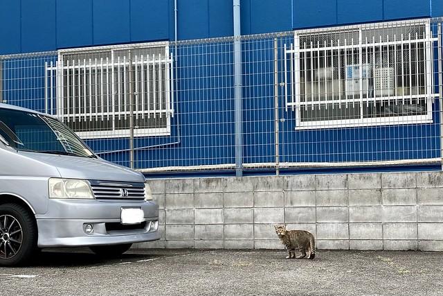 Today's Cat@2021−06−13