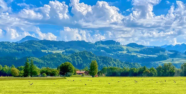 Bavarian landscpae with crows over a field in Bavaria, Germany