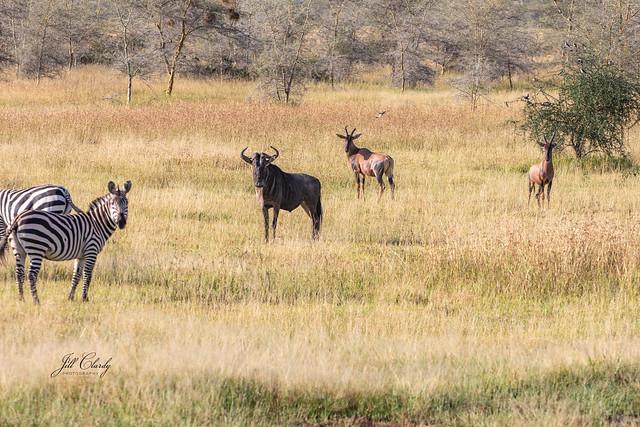 Armchair Traveling - Three Species in Serengeti National Park